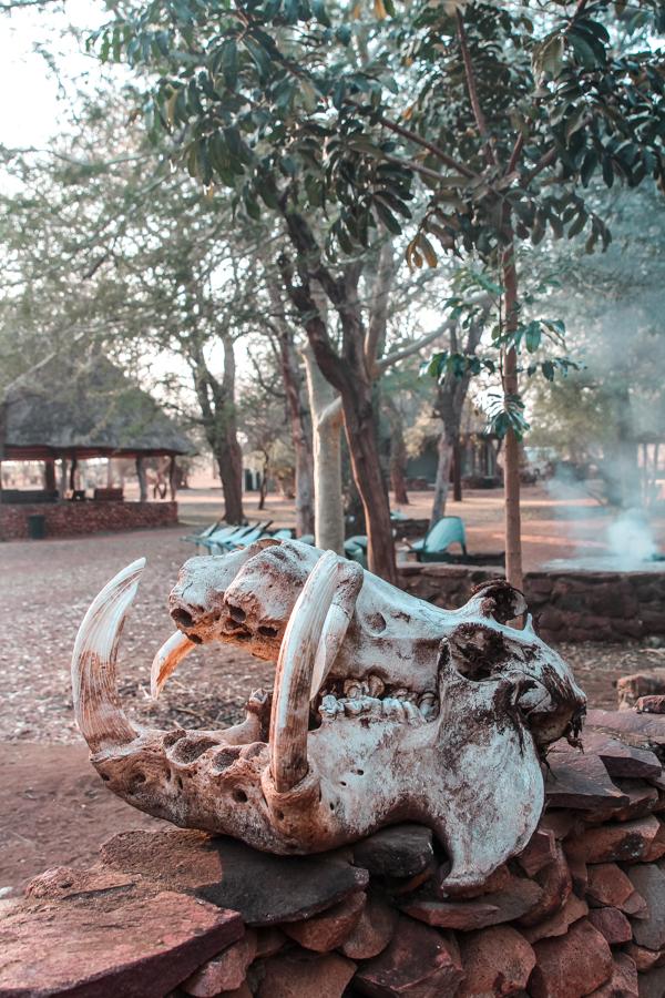 Ndlovu Camp at Hlane National Park