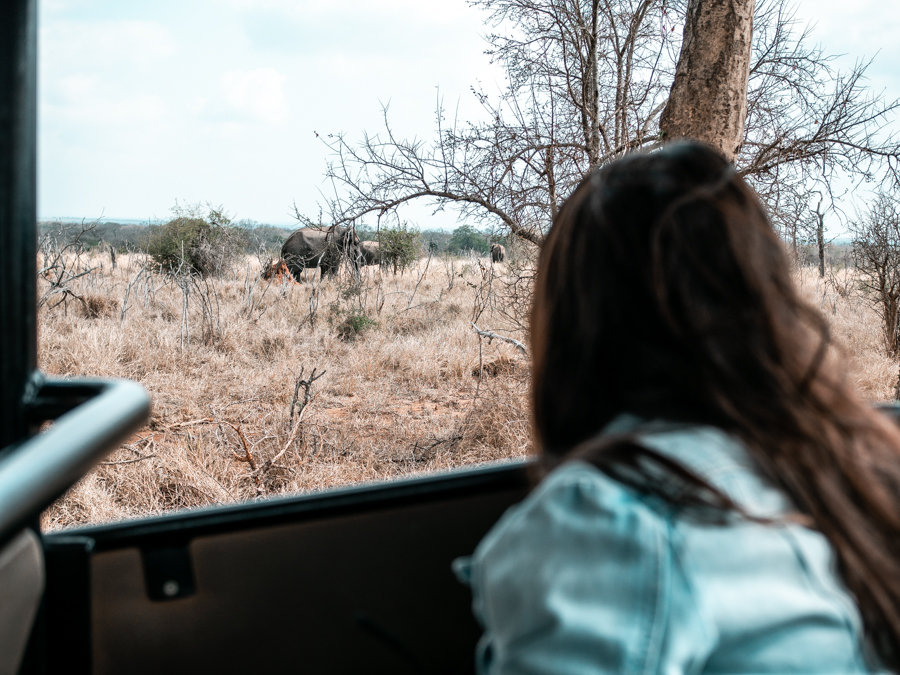 Watching elephants on a game drive in Hlane National Park, one of the most thrilling things to do in Swaziland