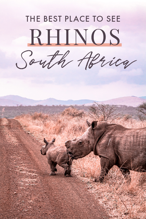 Dreaming of seeing rhinos in the wild in South Africa? If seeing rhinos is on your bucket list when visiting Africa and you're wondering where to go on safari for the best chances of seeing them, this luxury lodge and game reserve in South Africa should be high up on your itinerary! #SouthAfrica #Africa #Safari
