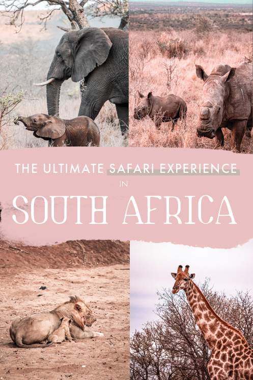 Wondering where to go on a safari in South Africa? If you're looking for the best game reserve for a safari of a lifetime in Africa, this lodge is the way to go! From enticing wildlife sightings to unbeatable luxury, Rhino River Lodge needs to be high up on your South Africa bucketist! #SouthAfrica #Africa #Safari