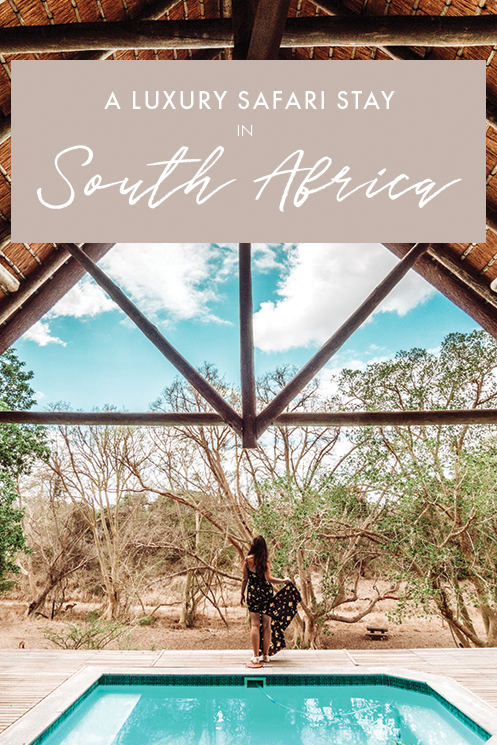 Wondering where to stay in South Africa for an unbeatable safari experience? If you're planning a trip to South Africa, chances are you're looking for a perfect place to see wildlife, regardless of whether you're traveling for leisure or for a romantic honeymoon. If a luxury safari experience is what you're after, here's where you should stay as part of you South Africa itinerary. #SouthAfrica #Africa #Safari