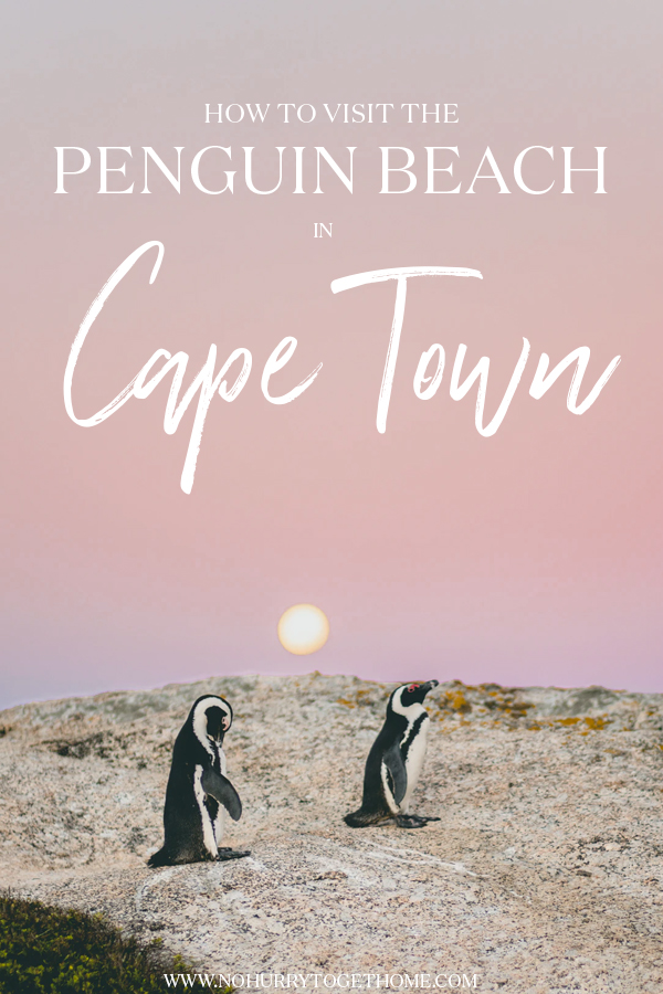 Wondering how to visit the penguin beach in Cape Town? On this post, I share everything you need to know about visit Boulders Beach, one of the most amazing wildlife destinations in South Africa