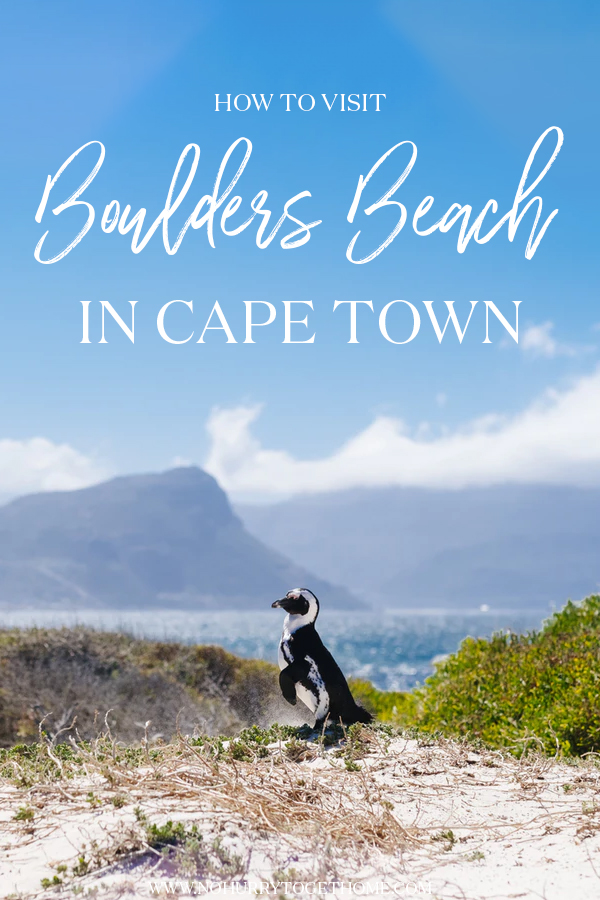 The ultimate guide to visit Boulders Beach, the famous beach in South Africa and one of the most exciting things to do in Cape Town! #SouthAfrica