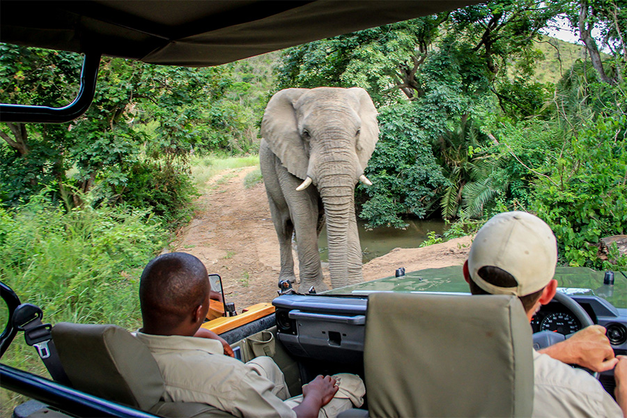 A safari at Thula Thula Private Game Reserve is a must!