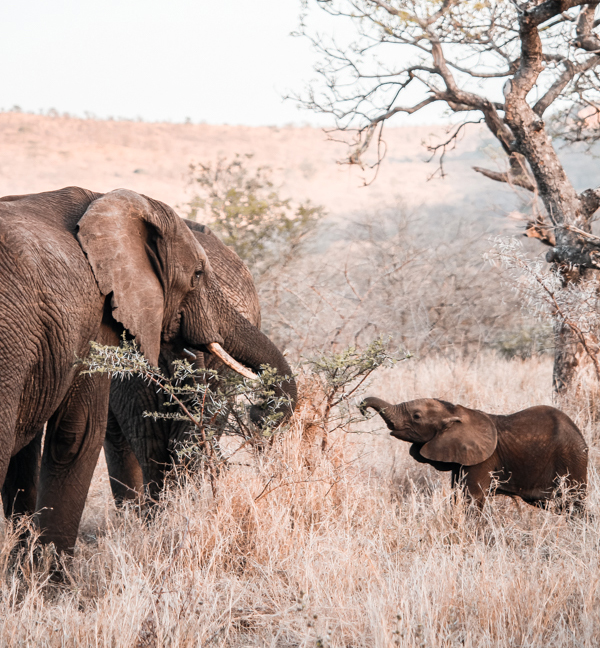The best game reserves in KZN for a weekend getaway