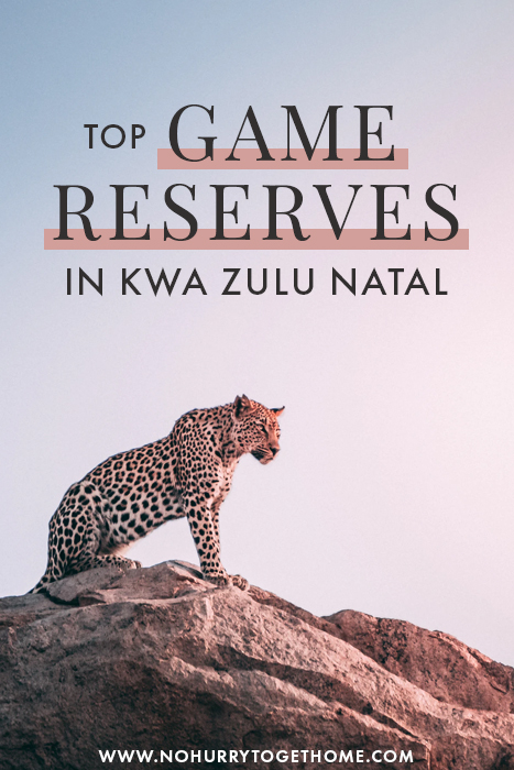 Planning a weekend getaway or a romantic escape in KwaZulu Natal? If a bush break is on the plans, here is a round up of the best lodges and game reserves in KZN that you can't miss!