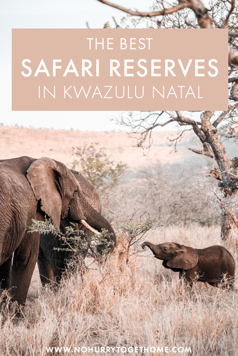 Wondering where to go on safari in South Africa? If KwaZulu Natal is on the plans, here are a few of the best game reserves, lodges, and safari experiences in KwaZulu Natal that you can't miss! #SouthAfrica #Safari