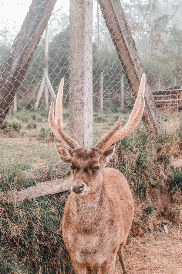 Ranca Upas, the deer destination in Bandung
