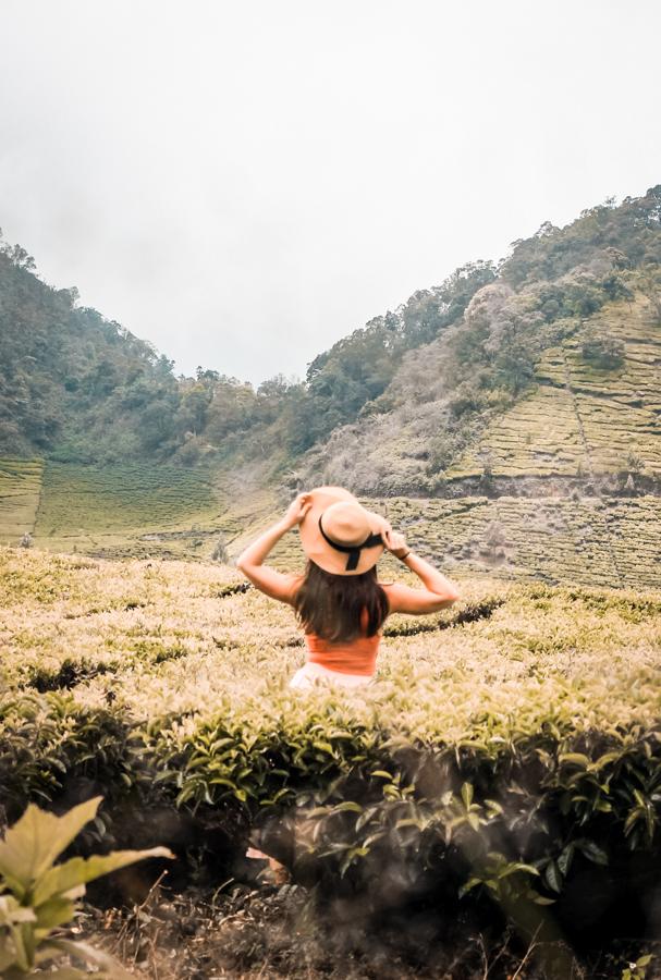 Exploring rice fields in Bandung