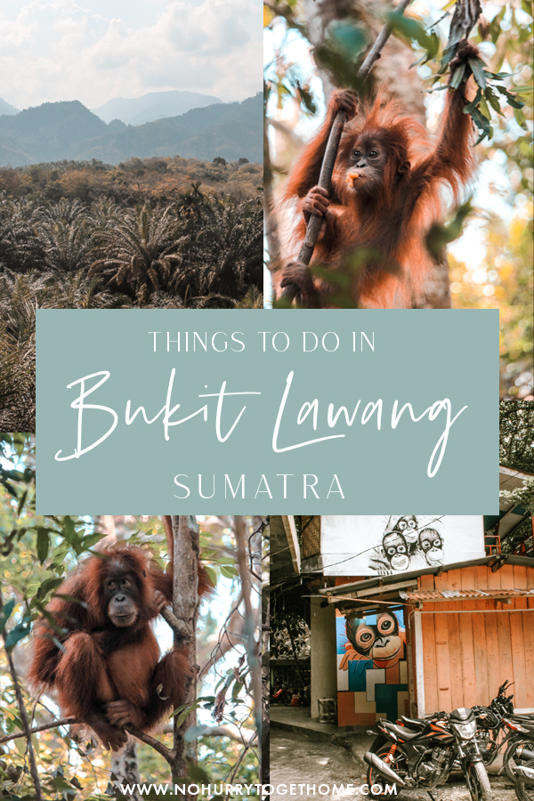 Visiting Bukit Lawang in Sumatra? If you're planning your trip to see orangutans in Sumatra, Bukit Lawang is probably on your Indonesia itinerary! On this post, I share the best things to do in Bukit Lawang as well as everything else you need to know to make the most out of your travels in this wonderful destination in Southeast Asia! #Sumatra #Indonesia