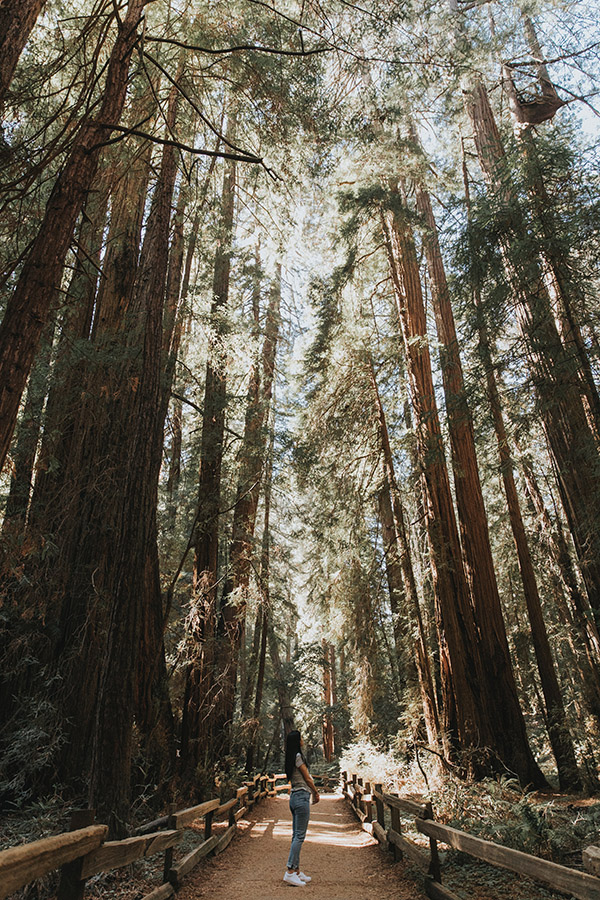 Unique state parks in California