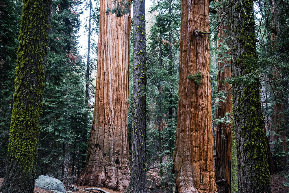 Sequoia National Park has some of the most unique nature in the world